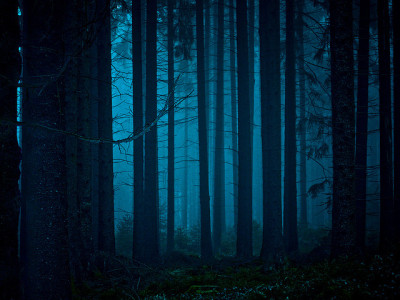 e-aves:  mystischer Wald - mystical forest by publik_oberberg on Flickr.