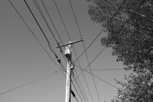 Black and White of Utility Pole and Tree