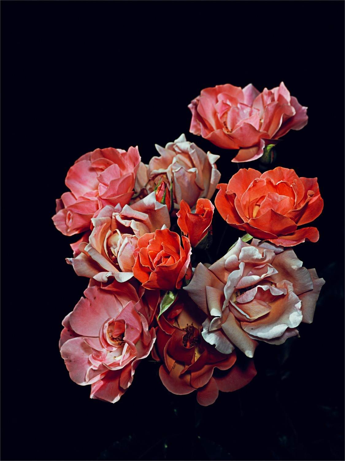 Rose Garden nº 7, Graham Lott