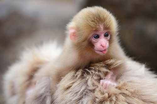 Newborn ,Todays Cuteness :)  (by Kiyo Photography)