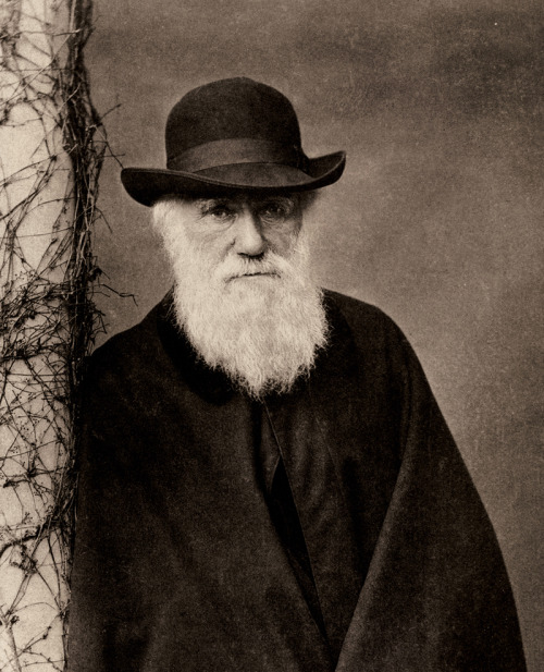 "DARWIN, CHARLES ROBERT (1809—1882), English naturalist, author of the Origin of Species, was born at Shrewsbury on the 12th of February 1809. He was the younger of the two sons and the fourth child of Dr Robert Waring Darwin, son of Dr Erasmus Darwin (q.v). His mother, a daughter of Josiah Wedgwood (1730—1795), died when Charles Darwin was eight' years old. Charles Darwin's elder brother, Erasmus Alvey (1804—1881), was interested in literature and art rather than science: on the subject of the wide difference between the brothers Charles wrote that he was ""inclined to agree with Francis Galton in believing that education and environment produce only a small effect on the mind of anyone, and that most pf our qualities are innate"" (Life and Letters, London, 1887, p. 22). Darwin considered that his own success was chiefly due to ""the love of science, unbounded patience in long reflecting over any subject, industry in observing and collecting facts, and a fair share of invention as well as of common sense "" (l.c. p. 107). He also says: "" I have steadily endeavoured to keep my mind free so as to give up any hypothesis, however much beloved (and I cannot resist forming one on every subject), as soon as facts are shown to be opposed to it "" (l.c. p. 103). The essential causes of his success are to be found in this latter sentence, the creative genius ever inspired by existing knowledge to build, hypotheses by whose aid further knowledge could be won, the calm unbiassed mind, the transparent honesty and love of truth which enabled him to abandon or to modify his own creations when they ceased to be supported by observation. The even balance between these powers was as important as their remarkable development. The great naturalist appeared in the ripeness of time, when the world was ready for his splendid generalizations. Indeed naturalists were already everywhere considering and discussing the problem of evolution, although Alfred Russel Wallace was the only one who, independently of Darwin, saw his way clearly to the solution. It is true that hypotheses essentially the same as natural selection were suggested much earlier by W. C. Wells (Phil. Trans., 1813), and Patrick Matthew (Naval Timber and Arboriculture, 1831), but their views were lost sight of and produced no effect upon the great body of naturalists. In the preparation for Darwin Sir Charles Lyell's Principles of Geology played an important part, accustoming men's minds to the vast changes brought about by natural processes, and leading them, by its lucid and temperate discussion of Lamarck's and other views, to reflect upon evolution.Darwin's early education was conducted at Shrewsbury, first for a year at a day-school, then for seven years at Shrewsbury School under Dr Samuel Butler (1774—1839). He gained but little from the narrow system which was then universal. In 1825 he went to Edinburgh to prepare for the medical profession, for which he was unfitted by nature. After two sessions his father realized this, and in 1828 sent him to Cambridge with the idea that he should become a clergyman. He matriculated at Christ's College, and took his degree in 1831, tenth in the list of those who do not seek honours. Up to this time he had been keenly interested in sport, and in entomology, especially the collecting of beetles. Both at Edinburgh, where in 1826 he read his first scientific paper, and at Cambridge he gained the friendship of much older scientific men—Robert Edmond Grant and William Macgillivray at the former, John Stevens Henslow and Adam Sedgwick at the latter. He had two terms' residence to keep after passing his last examination, and studied geology with Sedgwick. Returning from their geological excursion together in North Wales (August 1831), he found a letter frdm Henslow urging him to apply for the position of naturalist on the ""Beagle,"" about to start on a surveying expedition. His father at first disliked the idea, but his uncle, the second Josiah Wedgwood, pleaded with success, and Darwin started on the 27th of December 1831, the voyage lasting until the 2nd of October 1836. It is practically certain that he never left Great Britain after this latter date. After visiting the Cape de Verde and other islands of the Atlantic, the expedition surveyed on the South American coasts and adjacent islands (including the Galapagos), afterwards visiting Tahiti, New Zealand, Australia, Tasmania, Keeling cle Verdes and Azores on the way home. His work on the geology Df the countries visited, and that on coral islands, became the subject of volumes which he published after his return, as well as his Journal of a Naturalist, and his other contributions to the Dfficial narrative. The voyage must be regarded as the real preparation for his life-work. His observations on the relation between animals in islands and those of the nearest continental areas, near akin and yet not the same, and between living animals and those most recently extinct and found fossil in the ;ame country, here again related but not the same, led him even then to reflect deeply upon the modification of species. He had also been much impressed by ""the manner in which closely allied animals replace one another in proceeding southwards""collections, first at Cambridge for three months and then in London. His pocket-book for 1837 contains the words: ""In July opened first note-book on Transmutation of Species. Had been greatly struck from about the month of previous March and the evidence for the existence of evolution considered last of all. This method of presentation was no doubt adopted because it was just the want of a reasonable motive-cause which more than anything else prevented the acceptance of evolution. But the other side of the book must not be eclipsed by the brilliant theory of Darwin and Wallace. The evidence for evolution itself had never before been thought out and marshalled in a manner hvhich bears any comparison with that of Darwin in the Origin, and the work would have been in the highest degree epochmaking had it consisted of the later chapters alone. In the fifth chapter Darwin incorporated a certain proportion of the doctrines of Buffon,—modifications due to the direct influence of environment; and of Lamarck,—the hereditary effects of use and disuse. Lyell for a long time hesitated to accept the new teaching, and Darwin carried on a long correspondence with him. His public confession of faith was made at the anniversary dinner of the Royal Society in 1864. A storm of controversy arose over the book, reaching its height at the meeting of the British Association at Oxford in 1860, when the celebrated duel between T. H. Huxley and Bishop Wilberforce of Oxford took place. Throughout these struggles Huxley was the foremost champion for evolution and for fair play to natural selection, although he never entirely accepted the latter theory, holding that until man by his selection had made his domestic breed sterile inter se, there was no sufficient evidence that selection accounts for natural species which are thus separated by the barrier of sterility. The theory of natural selection was at first greatly misunderstood. Thus some writers thought it implied conscious choice in the animals themselves, others that it was the personification of some active power. By many it was thought to be practically the same idea as Lamarck's. Herbert Spencer's alternative phrase, "" the survival of the fittest,"" probably helped to spread a clear appreciation of Darwin's meaning.The history of opinion since 1859 maybe summed up as follows. Evolution soon gained general acceptance, except among a certain number of those of middle or more advanced age at the time when the Origin appeared. Although natural selection had been an essential force in producing this conviction, there gradually grew up a tendency to minimize its importance in relation to the causes originally suggested by Buffon and Lamarck, ~which were ably presented and further elaborated by Herbert Spencer. In America a school of Neo-Lamarckians appeared, and for a time flourished under the inspiration of the vigorous personality of E. D. Cope. The writings of August Weismann next raised a controversy over the scope of heredity, assailing the very foundation of the hypotheses of Buffon, Lamarck and Herbert Spencer by demanding evidence that the ""acquired characters"" upon which they rest are capable of hereditary transmission. The quantitative determination of heredity has been the subject of much patient investigation under the leadership of Francis Galton. The question of isolation as a factor in speciesformation has been greatly discussed, G. J. Romanes proposing, in his hypothesis of "" Physiological Selection,"" that the barrier of sterility may arise spontaneously by variation between two sets of individuals as the beginning instead of the climax of specific distinction. Others have fixed their attention upon the variations, which provided the material for natural selection, and have advocated the view that evolution proceeds by immense strides instead of the minute steps in which Darwin and Wallace believed. Others, again, have found significance in the artificial production of ""monstrosities"" or huge modifications during individual development. All through the period a varying proportion of naturalists, probably larger now than at any other time, has followed the founders of the theory, and has sought the motive-cause of evolution in."" the accumulative power of natural selection,"" which Darwin, as his first public statement indicates, looked upon ""as by far the most important element in the production of new forms."" They hold, with Darwin and Wallace, that although variation provides the essential material, natural selection, from its accumulative fower, is of such paramount importance that it may be said to create new species as truly as a man may be said to make a building out of the material provided by stones of various shapes, a metaphor suggested and elaborated by Darwin, and forming the concluding sentences of The Variation of Animals and Plants under Domestication. This, probably the second in importance of all his works, was published in 1868, and may be looked upon as a complete account of the material of which he had given a very condensed abstract in the first chapter of the Origin, together with the conclusions suggested by it. He finally brought together an immense number of apparently disconnected sets of observations under his ""provisional hypothesis of paisgenesis,"" which assumes that every cell in the body, at every stage of growth and in maturity, is represented in each germ-cell by a gemmule. The germ-cell is only the meeting-place of gemmules, and the true reproductive power lies in the whole of the body-cells which despatch their representatives, hence ""pangenesis."" There are reasons for believing that this infinitely complex conception, in which, as his letters show, he had great confidence, was forced upon Darwin in order to explain the hereditary transmission of acquired characters involved in the small proportion of Lamarckian doctrine which he incorporated. If such transmission does not occur, a far simpler hypothesis based on the lines of Weismann's "" continuity of the germ-plasm "" is sufficient to account for the facts.The Descent of Man, and Selection in Relation to Sex, was published in 1871; as the title implies, it really consists of two distinct works. The first, and by far the shorter, was the full justification of his statement in the Origin that ""light would be thrown. on the origin of man and his history."" In the second part he brought together a large mass of evidence in support of his hypothesis of sexual selection which he had briefly described in the 1858 essay. This hypothesis explains the development of colours and structures peculiar to one sex and displayed by it in courtship, by the preferences of the other sex. The majority of naturalists probably agree with Darwin in believing that the explanation is real, but relatively unimportant. It is interesting to note that only in this subject and those treated olin the Variation under Domestication had Darwin exhausted the whole of the material which he had collected. The Expression of the Emotions, published in 1872, offered a natural explanation of phenomena which appeared to be a difficulty in the way of the acceptance of evolution. In 1876 Darwin brought out his two previously published geological works on Volcanic Islands and South America as a single volume. The widely read Formation of Vegetable Mould through the Action of Wo-rms appeared ~fl 1881. He also published various volumes on botanical subjects. The Fertilization of Orchids appeared in 1862. The subject of crossfertilization of flowers was in Darwin's mind, as shown by his note-book in 1837. In. 1841 Robert Brown directed his attention to Christian Conrad Sprengel's work (Berlin, 1793), which confirmed his determination to pursue this line of research. The Effects of Cross- and Self-Fertilization in the Vegetable Kingdom (1876) contained the direct evidence that the offspring of crossfertilized individuals are more vigorous, as well as more numerous, than those produced by a self-fertilized parent. Different Forms of Flowers on Plants of the Same Species appeared in 1877. It is here shown that each different form, although possessing both kinds of sexual organs, is specially adapted to be fertilized by the pollen of another form, and that when artificially fertilized by its own pollen less vigorous offspring, bearing some resemblance to hybrids, are produced. He says, ""no little discovery of mine ever gave me so much pleasure as the making out the meaning of heterostyled flowers ""(Autobiography). Climbing Plants was published in 1875, although it had, in large part, been communicated to the Linnean Society, in whose publications much of the material of several of his other works appeared. This inquiry into the nature of the movements of twining plants was suggested to him in a paper by Asa Gray. The Power of Movement in Plants (1880) was produced by him in conjunction with his son Francis. It was an inquiry into the minute power of movement possessed, he believed, by plants generally, out of which the larger movements of climbing plants of many different groups had been evolved. The work included an investigation of other kinds of plant movement due to light gravity, &r"" liii of which he regarded as modifications of the one fundamental movement (circumnutation) which exists in a highly specialized form in climbing plants. Insectivorous Plants (1875) is principally concerned with the description of experiments on the Sun-dew (Drosera),although other insect-catching plants, such as Dionaea, are also investigated.Charles Darwin's long life of patient, continuous work, the most fruitful, the most inspiring, in the annals of modern science, came to an end on the I9th of April 1882. He was buried in Westminster Abbey on the 26th. It is of much interest to attempt to set forth some of the main characteristics of the man who did so much for modern science, and in so large a measure moulded the form of modern thought. Although his ill-health prevented Darwin, except on rare occasions, from attending scientific and social meetings, and thus from meeting and knowing the great body of scientific and intellectual workers of his time, probably no man has ever inspired a wider and deeper personal interest and affection. This was in part due to the intimate personal friends who represented him in the circles he was unable frequently to enter, but chiefly to the kindly, generous, and courteous nature which was revealed in his large correspondence and published writings, and especially in his treatment of opponents.In a deeply interesting chapter of the Life and Letters Francis Darwin has given us his reminiscences of his father's everyday life. Rising early, he took a short walk before breakfasting alone at 7.45, and then at once set to work, ""considering the 11/2 hours between 8.0 and 9.30 one of his best working times."" He then read his letters and listened to reading aloud, returning to work at about 10.30. At 12 or 12.15 ""he considered his day's work over,"" and went for a walk, whether wet or fine. For a time he rode, but after accidents had occurred twice, was advised' to give it up. After lunch he read the newspaper and wrote his letters or the MS. of his books. At about 3.0 he rested and smoked for an hour while being read to, often going to sleep. He then went for a short walk, and returning about 4.30, worked for an hour. After this he rested and smoked, and listened to reading until tea at 7.30, a meal which he came to prefer to late dinner. He then played two games of backgammon, read to himself, and listened to music and to reading aloud. He went to bed, generally very much tired, at 10.30, and was often much troubled by wakefulness and the activity of his thoughts. It is thus apparent that the number of hours devoted to work in each day was comparatively few. The immense amount he achieved was due to concentration during these hours, also to the unfailing and, because of his health, the necessary regularity of his life.The appearance of Charles Darwin has been made well known in numerous portraits and statues. He was tall and thin, being about six feet high, but looked less because of a stoop, which increased towards the end of his life. As a young man he had been active,with considerable powers of endurance, and possessed in a marked degree those qualities of eye and hand which make the successful sportsman.Charles Darwin was, as a young man, a believer in Christianity, and was sent to Cambridge with the idea that he would take orders. It is probable, however, that he had merely yielded to the influences of his home, without thinking much on the subject of religion. He first began to reflect deeply on the subject during the two years and a quarter which intervened between his return from the"" Beagle"" (October 2nd, 1836) and his marriage (January 29th, 1839). His own words are, "" disbelief crepf over me at a very slow rate, but was at last complete. The rate was so slow that I felt no distress."" His attitude was that of the tolerant unaggressive agnostic, sympathizing with and helping in the social and charitable influences of the English Church in his parish. He was evidently most unwilling that his opinions on religious matters should influence others, holding, as his son, Francis Darwin, says, "" that a man ought not to publish on a subject to which he has not given special and continuous thought "" (i.e. i. p. 305).In addition to the personal qualities and powers of Charles Darwin, there were other contributing causes without which the world could never have reaped the benefit of his genius. It is evident that Darwin'si'iealth could barely have endured the strain of working for a living, and that nothing would have been left over for his researches. A deep debt of gratitude is owing to his father for placing him in a position in which all his energy could be devoted to scientific work and thought. But his ill-health was such that this important and essential condition would have been insufficient without another even more essential. Francis Darwin, in the Life and Letters (i. pp. 159—160), writes these eloquent and pathetic words:—"" No one indeed, except my mother, knows the full amount of suffering he endured, or the full amount of his wonderful patience. For all the latter years of his life she never left him for a night; and her days were so planned that all his resting hours might be shared with her. She shielded him from every avoidable annoyance, and omitted nothing that might save him trouble, or prevent him becoming over-tired, or that might alleviate the many discomforts of his ill-health. I hesitate, to speak thus freely of a thing so sacred as the Jifelong devotion which prompted all this constant and tender care. But it is, I repeat, a principal feature of hi's life, that for nearly forty years he never knew one day of the health of ordinary men, and that thus his life was one long struggle against the weariness and the strain of sickness. And this cannot be told without speaking of the one condition which enabled him to bear the strain and fight out the struggle to the end.""Charles Darwin was honoured by the chief societies of the civilized world. He was made a knight of the Prussian order, ' Pour le Mérite,"" in 1867, a corresponding member of the Berlin Academy of Sciences in 1863, a fellow in 1878, and later in the same year a corresponding member of the French Institute in the botanical section. He received the Bressa prize of the Royal Academy of Turin, and the Baly medal of the Royal College of Physicians in 1879, the Wollaston medal of the Geological Society in 1859, a Royal medal of the Royal Society in 1853, and the Copley medal in 1864. His health prevented him from accepting the honorary degree which Oxford University wished to confer on him, but his own university had stronger claims, and he received its honorary LL.D. in 1877.Two daughters and five sons survived him, four of the latter becoming prominent in the scientific world,—Sir George Howard (b. 1845), who became professor of 'astronomy and experimental philosophy at Cambridge in 1883; Francis (b. 1848), the distinguished botanist; Leonard (b. 1850), a major in the royal engineers, and afterwards well known as an economist; and Horace (b. 1851), civil engineer."