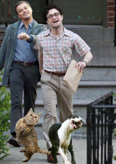 just takin our pets out for a strut.