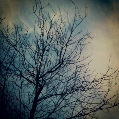 #tree #branches #sky #bush #wood #park #forest #botanical #garden #instagram #instahub #instagood #instamood #ig  (Taken with instagram)
