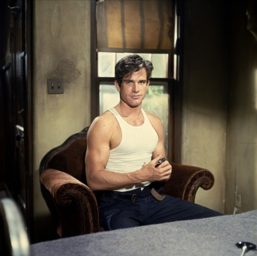 guywoodhouse:  Warren Beatty  Bonnie and Clyde (1967) Clyde showing off his gun(s)   oh hai