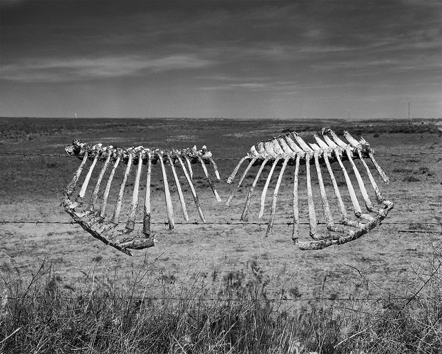Fences - Thorp, WA on Flickr.This is my third and most successful attempt at large format photography. Hopefully this is the start of a trend.