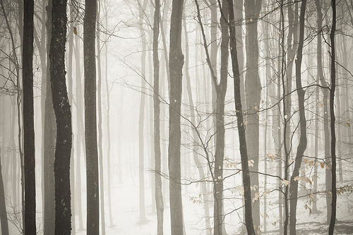 definitelydope:  on a foggy new years day (by mstudiofoto)