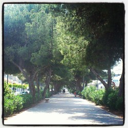 #walking #time #surrounded by #trees / tiempo de paseo rodeado de árboles / #instagram #igers #tree #bushes #floor #nature #sky #green #dark #people #walk #wood #avenue #street #road  (Tomada con instagram)