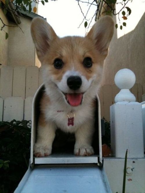 funfoever:  Cute dog ilovehim
