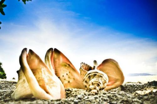 She sells seashells by the seashore.