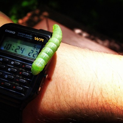 """Hey man, can I borrow your calculator?"" #bug #caterpillar #science #nature #biology #casio #calculator #watch #animal #morning #iPhoneOnly  (Taken with instagram)"