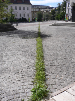 Cut, Spontanvegetation, 100 m, Universität Innsbruck 1999 by Lois Weinberger