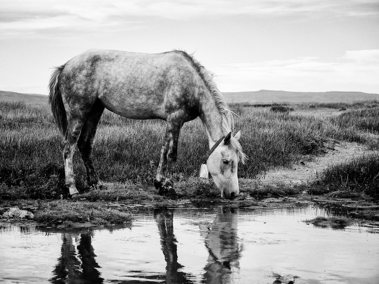 A horse drinking water in El Calafate, Argentina. December 13th, 2012.
