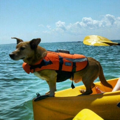Sea dog  #puppy #dog #kayak #kayaking  (Taken with instagram)