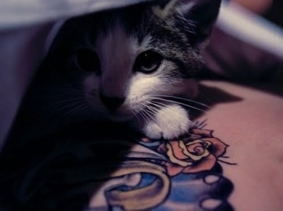cats and tats