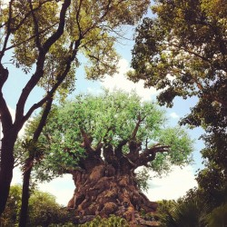 brittbluntstern:  #treeoflife #animalkingdom #disneyworld  (Taken with instagram)