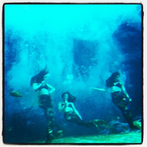Mermaids!!! (Taken with Instagram at Weeki Wachee Springs)