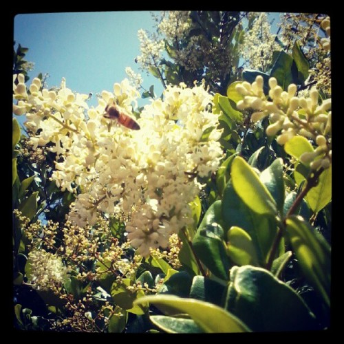 jetsabel:  Got to make that honey.. #bees, #honeybees (Taken with instagram)