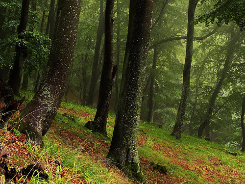 faerieangel:  High Forest… in the rain (by JoannaRB2009)