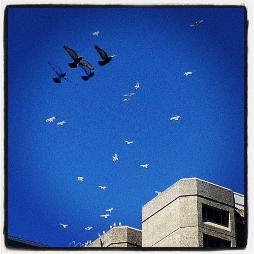 birds over tenderloin (Taken with Instagram at The Tenderloin)