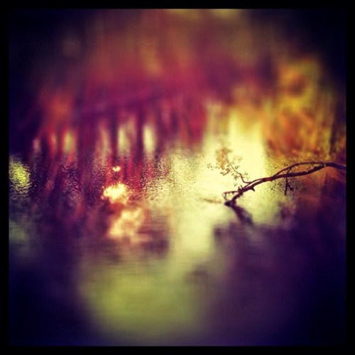 From the banks of the Red Cedar #iphone #lemecamera #tiltshift #snapseed  (Taken with Instagram at Red Cedar River)