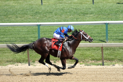 Maryland Sprint Handicap winner Hamazing Destiny © Merlinoftheroundtable