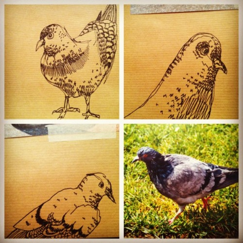 #quick #bird #pen #sketchbook #sketch #art #drawing #pigeon  (Taken with instagram)