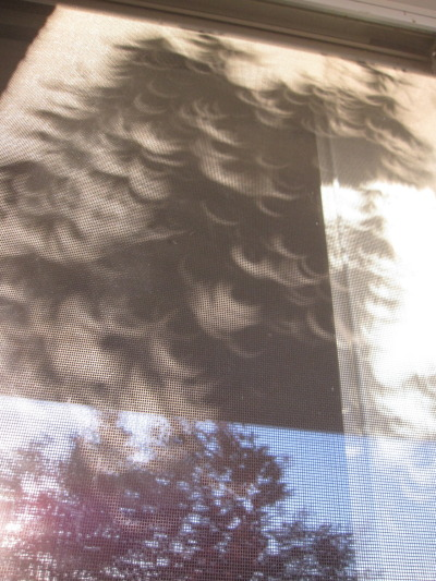 threemonthsandaday:  partial eclipse shadows through the redbud  dude. best view from my place ever.