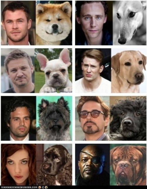 my-cosmovision:  I would definitely watch the dog version of the avengers.