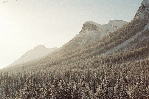 archenland:  0005_32 (by Randee Lee)