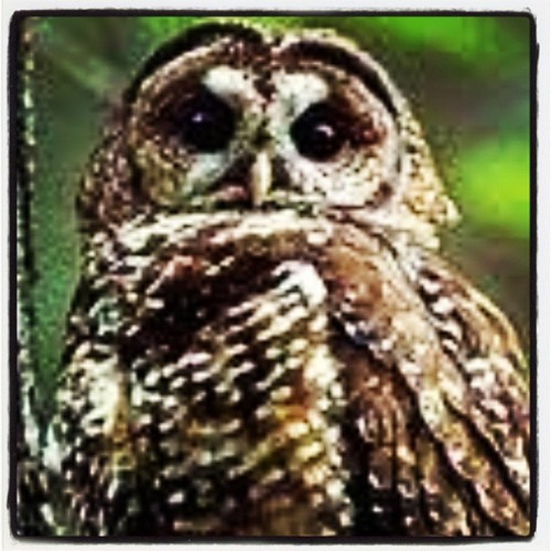 #owl are you? (Taken with instagram)