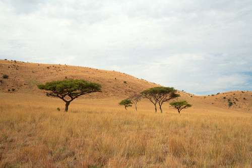 Veld, Rustenberg, South Africa.Savana, Rustenberg, África do Sul. Photo copyright: Louis Joubert