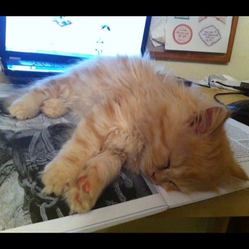 Mog, asleep on my uni readings. #kitten #ginger #mog #cat #uni work #uni readings  (Taken with instagram)