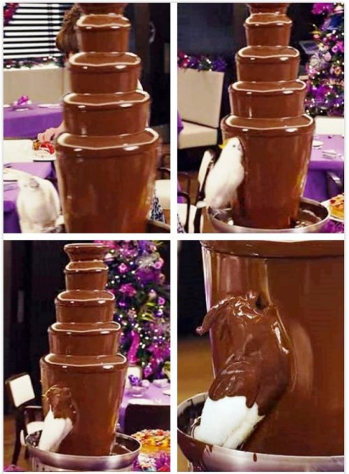 Bird Bathes in Chocolate Fountain This bird is living the dream