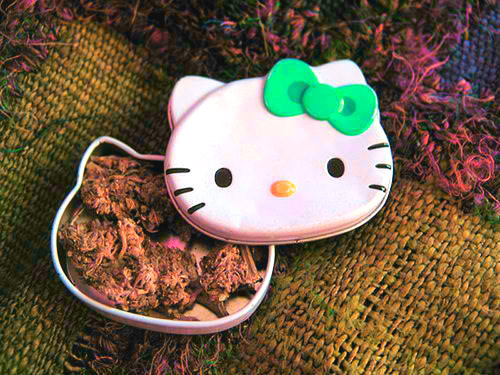 Hello Kitty Got Bud (;