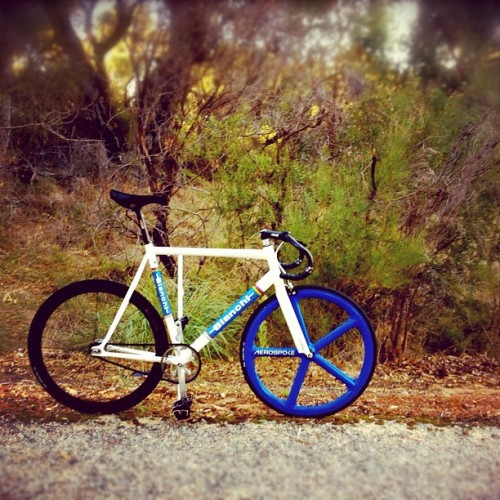 alittleking:  #fixedgear #bush #outriding #fixie #pista #bianchi #aerospoke (Taken with Instagram at Carabooda, WA)