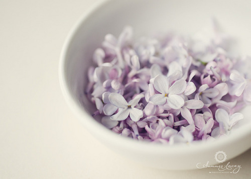 untitled by smmr_lacey on Flickr. ~ lilac blossoms ~ so pretty