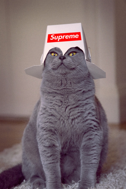 lifestab:  Supreme cat!