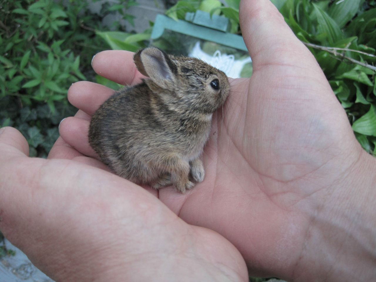 """It's dangerous to go alone. Take this!"" Photo via Imgur"
