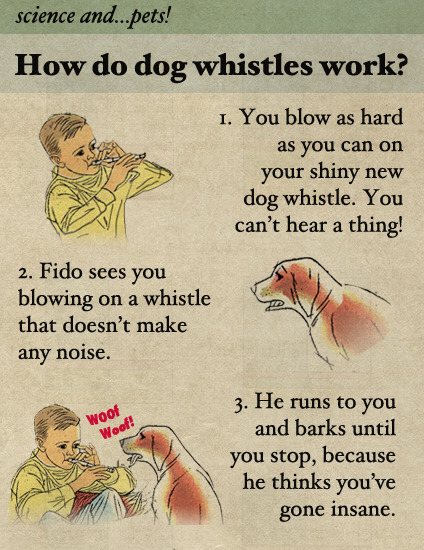 How Do Dog Whistles Work?