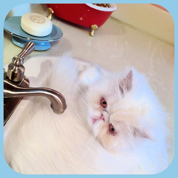 Chester auditions for his favorite band, In-Sink. (Taken with instagram)