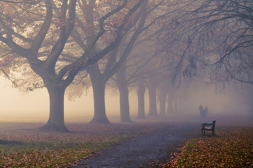 definitelydope:  Autumn Fog (by Strep72)