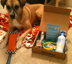 The dogs got their first BarkBox this weekend! Here's Maya with the goodies. I found a great deal for almost 50% off a 3 -month sub. Mochi the Boxer immediately stole the toy from Maya. Have you thought about spoiling your dogs with BarkBox?