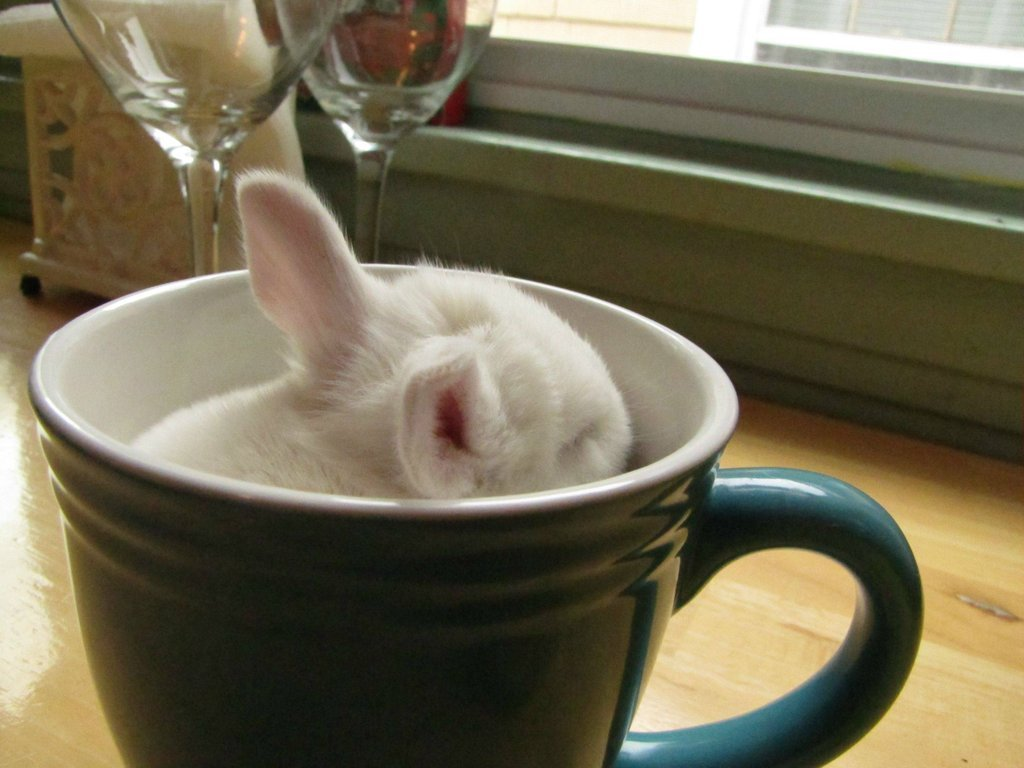 Oh, just a Bunny in a cup… Photo by ©Silverbeat