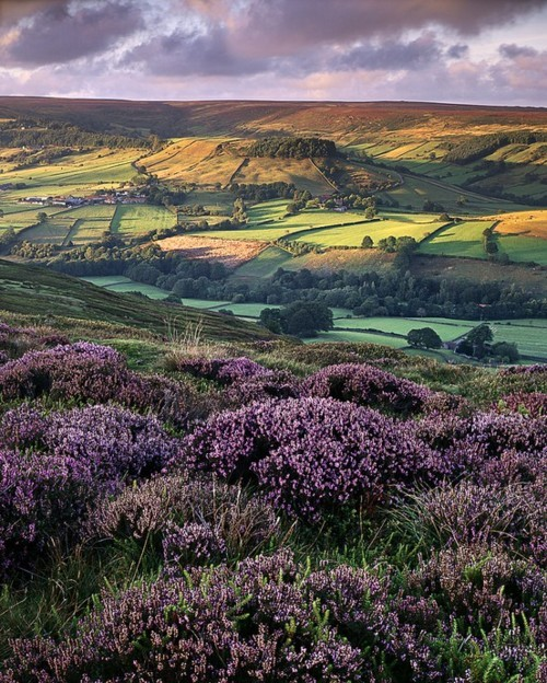 bluepueblo:   Rosedale, North Yorkshire, England  photo by Ross J Brown.