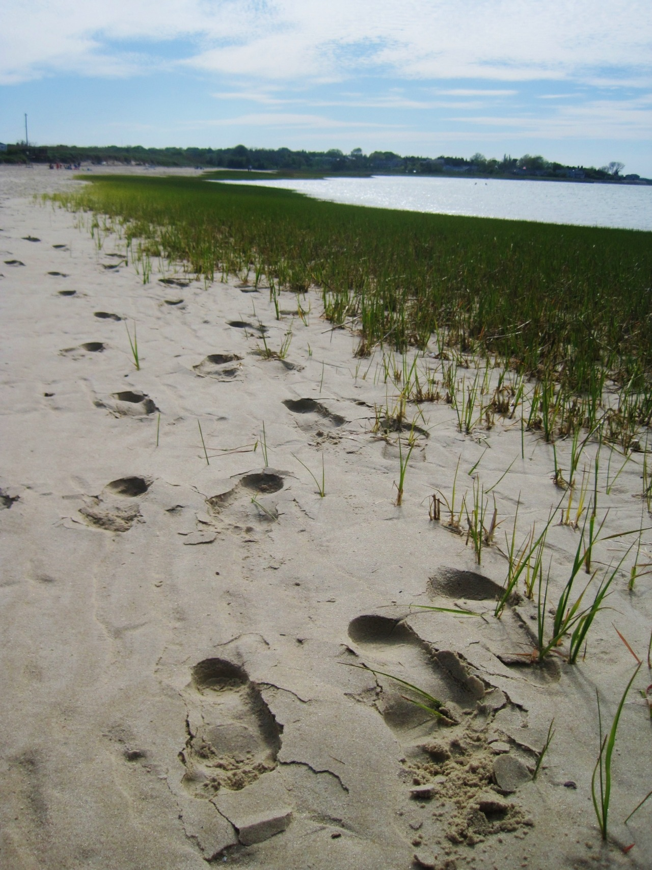 Footprints in the sand. Out on Cape Cod.