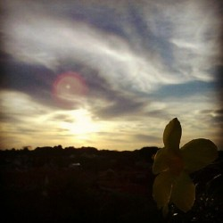 #Singapore #sunset #sky #evening #cloud #plant #yellow #flower  (Taken with instagram)