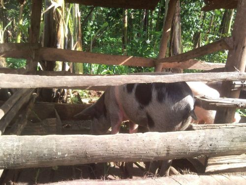 Recent pictures from Bunabumali Because of the recent arrival of 4 pigs and scheduled birth of 12 piglets that required building stables first, building activities of the Seats2Meet meeting room has been on hold. Scheduled opening of #S2M Bunabumali is now August 2012.  More updates within the next few days., also about the planned expanison to Kampala, where we will open a Seats2Meet location as well end of this year. This promisses to be a real breaktrough, a rural community in Uganda moving into the capital