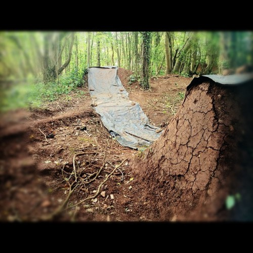 ilovethewoods:  #dry. #instabmx #woods #bmx #trails  (Taken with instagram)
