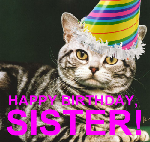 Download image funny cat happy birthday sister pc android iphone and