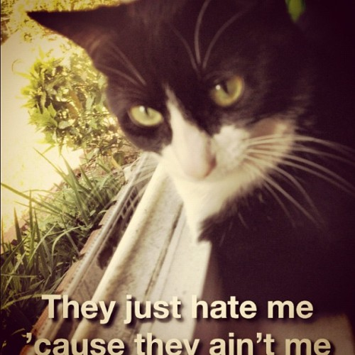 My cat is thug. #idcapthat #kittycat (Taken with instagram)